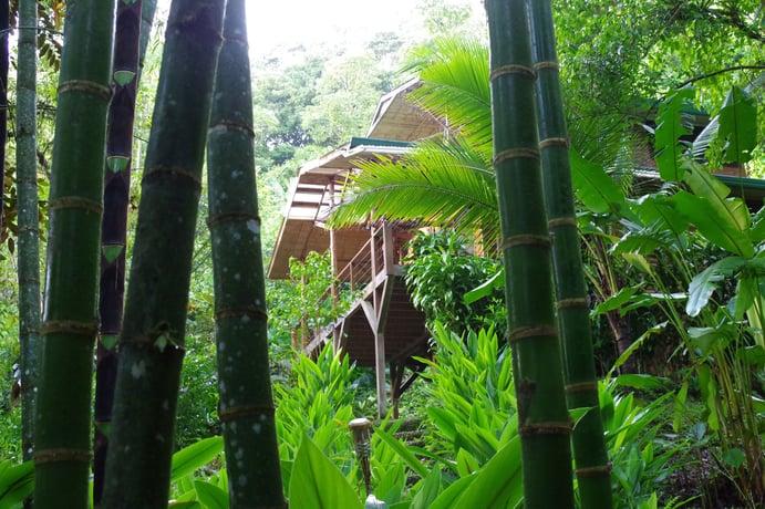 Finca Bellavista, Costa Rica