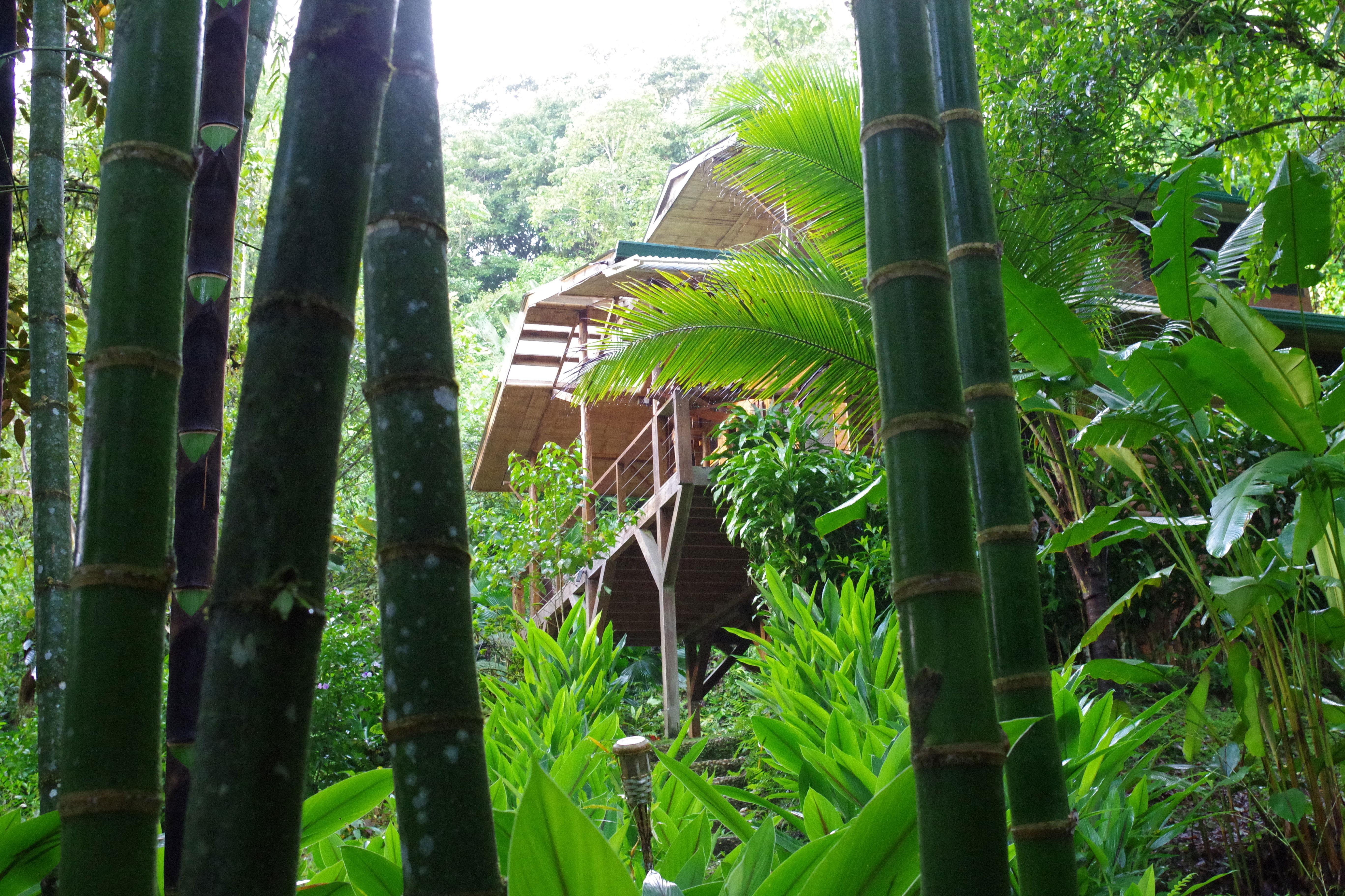bambus_naturhaus.jpg
